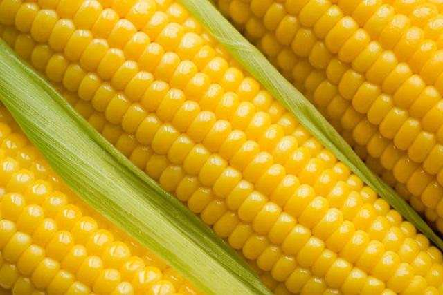 Milho, um cereal importante e cheio de nutrientes