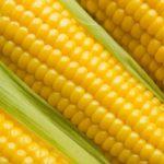 Milho é um cereal importante e cheio de nutrientes